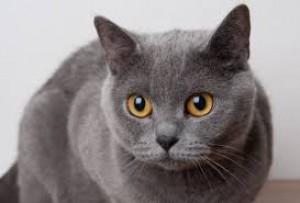 Mačka je svojrázny a samostatný tvor. Pri výchove mačky sa nedá postupovať  ako napríklad pri výchove psa. Napriek tomu je potrebné od prvého dňa mačke  dať ... 83d5116f403
